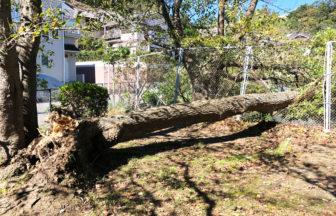【木が倒れてる~!】2019年台風19号通過翌朝・谷戸池と栄光坂