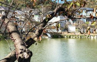 谷戸池の穏やかな秋と生き物たち・栄光坂の工事の様子